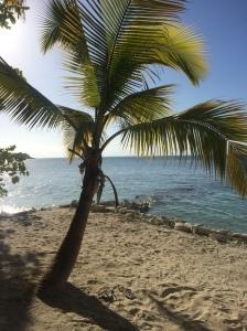 Vamos a Leer | Teaching About Haiti with Love
